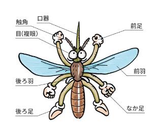 けむっし~ブログ 蚊の仕組み